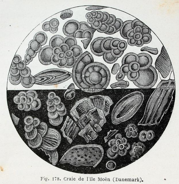Fossilien auf der Insel Mön
