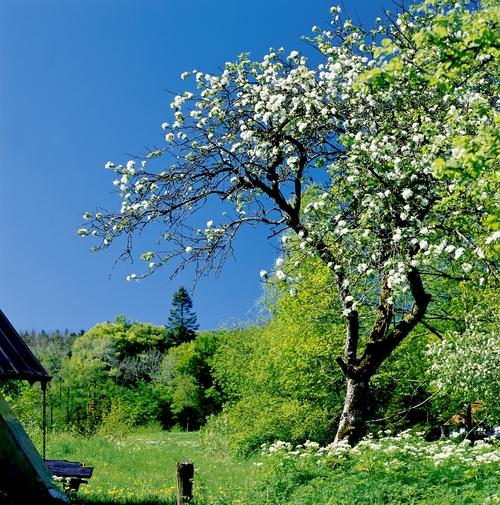 Dänemark in Frühling