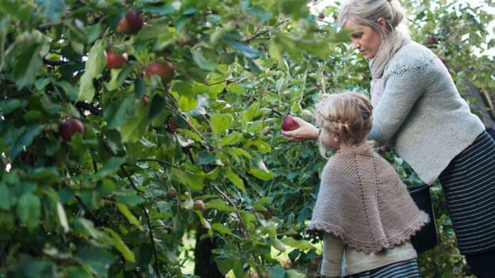 fuenen-apfelplantage-destination-fyn