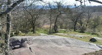 Bornholm – Neue tolle Felszeichnungen gefunden